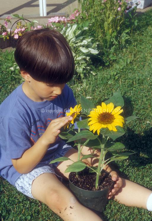 Boy sitting with sun flowers in garden on lawn