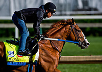 LOUISVILLE, KENTUCKY - MAY 01: Hence, owned by Calumet Farm and trained by Steve Asmussen, exercises in preparation for the Kentucky Derby during Kentucky Derby and Oaks preparations at Churchill Downs on May 1, 2017 in Louisville, Kentucky. (Photo by Scott Serio/Eclipse Sportswire/Getty Images)