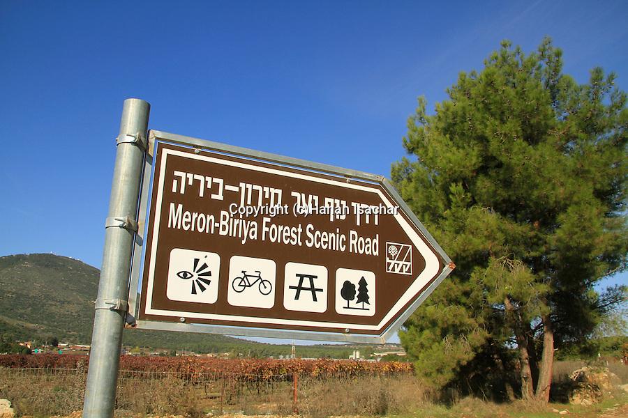 Israel, Upper Galilee, Meron-Biriya forest scenic road