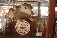 Bezerro de duas cabe&ccedil;as, museo do Maraj&oacute;<br /> Cachoeira do Arari, Par&aacute;, Brasil.<br /> 08/05/2006<br /> Foto Paulo Santos/Interfoto