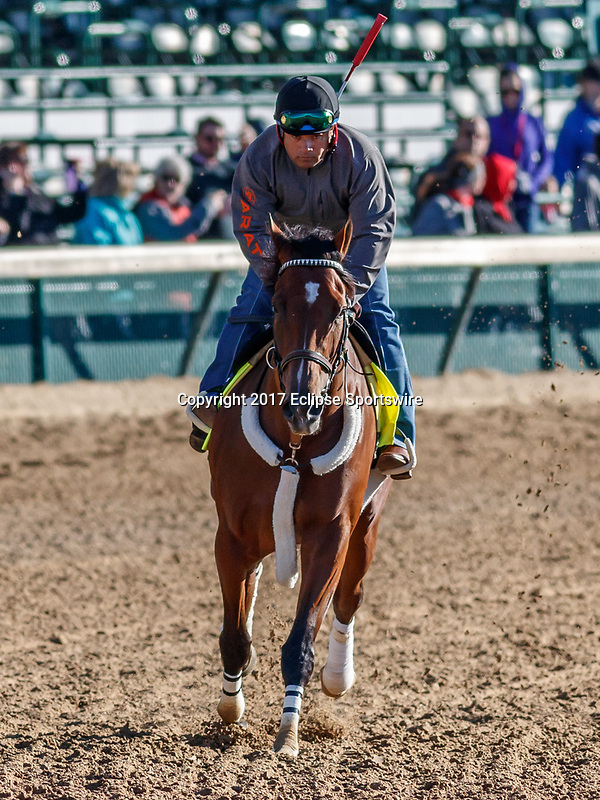 LOUISVILLE, KENTUCKY - MAY 02: Irap, owned by Reddam Racing LLC and trained by Doug O'Neill, exercises in preparation for the Kentucky Derby at Churchill Downs on May 2, 2017 in Louisville, Kentucky. (Photo by Jesse Caris/Eclipse Sportswire/Getty Images)