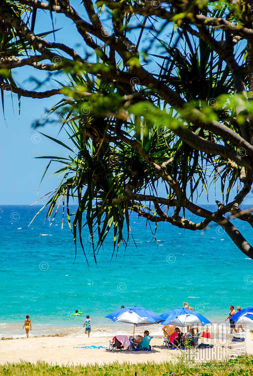 People enjoying a sunny day at the Big Island's Hapuna Beach, with a hala tree in the foreground. This white sand beach has been rated one of the best beaches in the world.