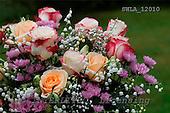 Carl, FLOWERS, photos, SWLA12010,#f# Blumen, Natur, flores, naturaleza