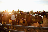USA, Wyoming, Encampment, a wrangler gathers horses for guests at a dude ranch, Abara Ranch