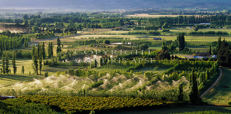 Orchards and crops in the Alexandra area. Otago Region.  New Zealand.