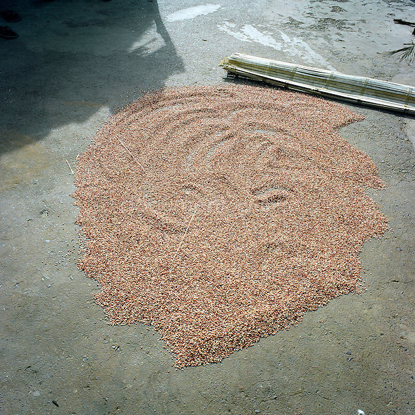 Some millet drying on the floor.