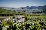 The peloton wind their way through the vineyards during Stage 5 of the 2019 Tour de France running 175.5km from Saint-Die-des-Vosges to Colmar, France. 10th July 2019.<br /> Picture: ASO/Pauline Ballet | Cyclefile<br /> All photos usage must carry mandatory copyright credit (© Cyclefile | ASO/Pauline Ballet)