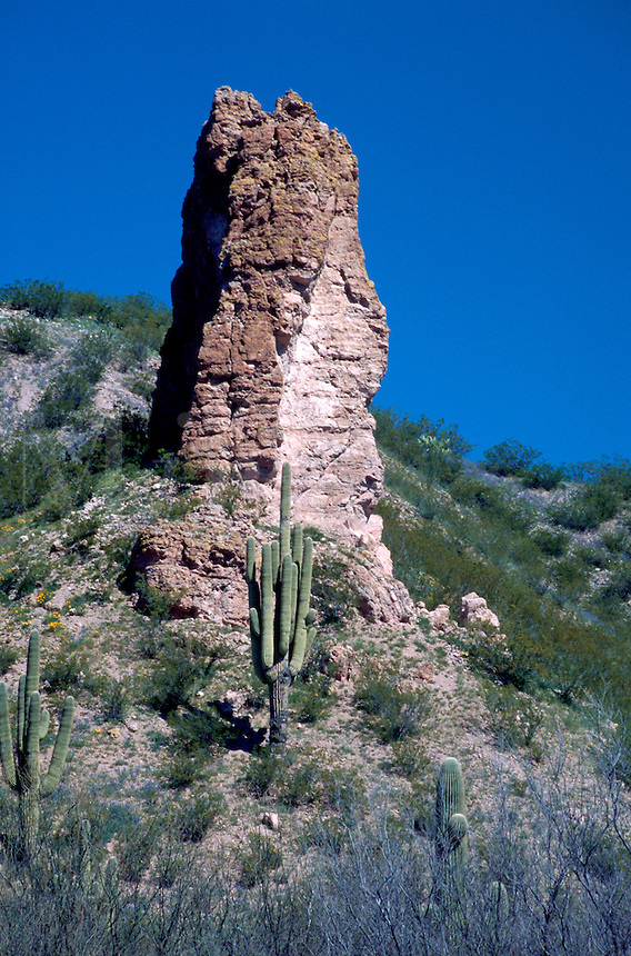 A Saguaro Cactus (Cereus gigantes)grows in front of a large rock formation in the desert. Sonoran Desert, Arizona.