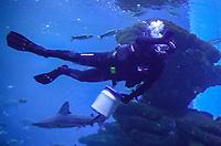 Taucher zur Fütterung im Big Blue Shark Becken im Aquarium von Palma de Mallorca - Palma de Mallorca 26.05.2019: Aquarium von Mallorca in Plama