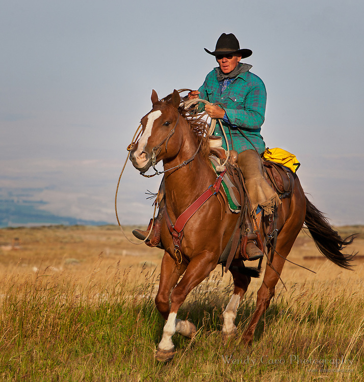 Cowboy roping mustangs on ridge, morniing, Bighorn Mountains, Wyoming.