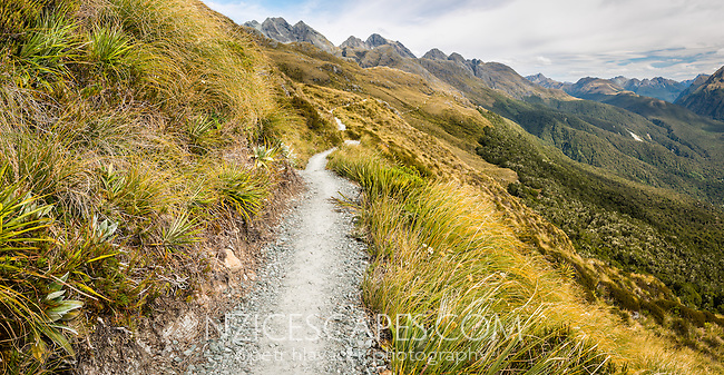 Routeburn Track on western slopes of Ailsa Mountains, Fiordland National Park, UNESCO World Heritage Area, Southland, South Island, New Zealand, NZ