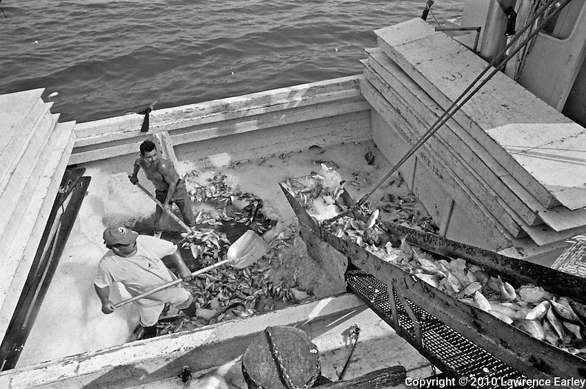 Runboats bring fish from the fisherman to the fish house.  Here the fish are brought into the fish house where they are sorted by species and size, boxed and shipped to buyers.