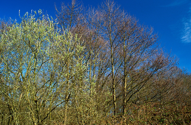 Deciduous Woodland in Late Winter
