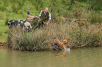 FAO JANET TOMLINSON, DAILY MAIL PICTURE DESK<br /> Pictured: Mark Thompson training one of his dogs in the farm pond Wednesday 23 November 2016<br /> Re: The Dog House in the village of Talog, Carmarthenshire, Wales, UK