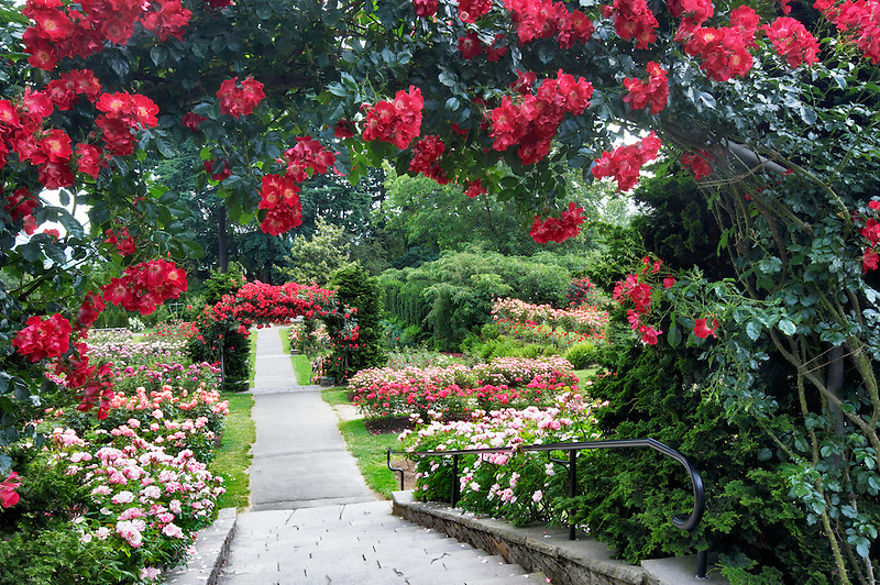 Rose archway and path. Portland Rose Testr Garden. Oregon