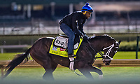 LOUISVILLE, KENTUCKY - MAY 03: Always Dreaming, owned by Brooklyn Boyz Stables and trained by Todd Pletcher, exercises in preparation for the Kentucky Derby at Churchill Downs on May 3, 2017 in Louisville, Kentucky. (Photo by Scott Serio/Eclipse Sportswire/Getty Images)