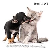 Xavier, ANIMALS, REALISTISCHE TIERE, ANIMALES REALISTICOS, FONDLESS, photos+++++,SPCHWS604,#A#
