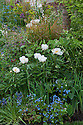 Paeonia 'Krinkled White', The Wasteland Garden, designed by Kate Gould, RHS Chelsea Flower Show 2013.