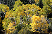 Fall color, June Lake Loop, near Yosemite National Park, California.