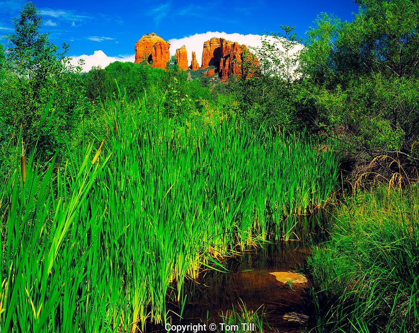 Lush Greenery at Red Rock Crossing, Oak Creek, Arizona     Coconino National Forest   Near Sedona
