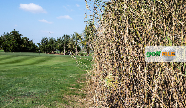 Right side of the 7th lies thick bamboo,The Track at The Meydan Golf Club, Dubai, United Arab Emirates.  31/01/2016. Picture: Golffile | David Lloyd<br /> <br /> All photos usage must carry mandatory copyright credit (&copy; Golffile | David Lloyd)