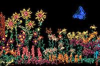 "Holiday Lights color Bellevue Botanical Gardens' seasonal ""Garden D'Lights"" display. Bellevue, Washington State."
