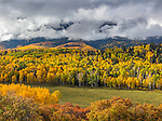 Uncompahgre National Forest, Colorado: Foothills and valley floor cloaked in autumn colors with storm clouds covering the Sneffels mountain range