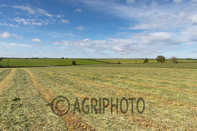 19.5.2020 Silage field in Rutland <br /> ©Tim Scrivener Photographer 07850 303986<br />      ....Covering Agriculture In The UK....