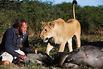 Botswana, Kalahari, Valentin Gruener with a lioness he raised, on a wildebeest kill; the lioness has successfully killed 14 antelopes