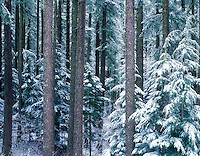 V00348M.tif   Snow on trees. Willamette Pass, Oregon