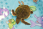Green Turtle In Pool Warming Up