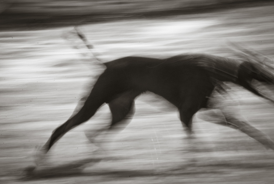 Blurred silhouette of running dog captured while in motion.