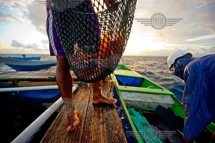 A Bajau fisherman, with the day's catch of Grouper, brings them to the storage nets of an export company, where they'll be kept until ready for export. This particular company insists on a sustainable catching system using traditional fishing methods, but many others actively encourage their fishermen to use cyanide which devastates whole reef colonies as the deadly mixture is dispersed widely by currents and is thought to be more destructive, in the long term, than dynamite fishing. The Bajau (Bajo) Laut are an ethnic group of Malay origin, they have for centuries lived out their lives almost entirely at sea, plying a tract of ocean between Malaysia, the Philippines and Indonesia.