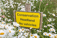 Six meter conservation headland - Norfolk, June