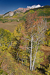 Aspens And Avery Peak, Colorado
