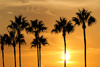 Palm Tree Silhouette at Sunset in Orange County, CA