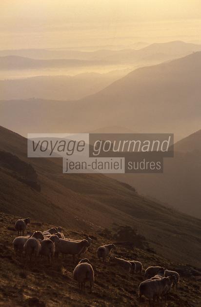 Europe/France/Aquitaine/64/Pyrénées-Atlantiques: Moutons au Pic de l'Artzamendi