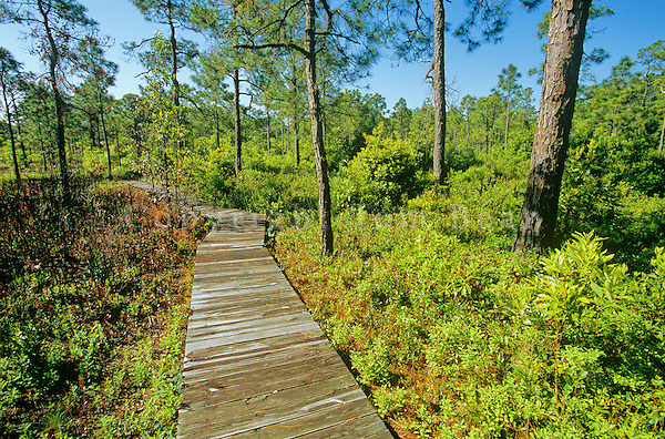 Boardwalk on Fly Trap Trail at Carolina Beach State Park, south of Wilmington, North Carolina, AGPix_0637..
