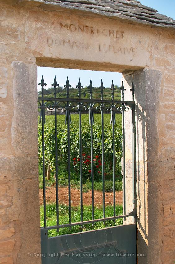 """Vineyard. Domaine Leflaive. """"Le Montrachet"""" Grand Cru, Puligny Montrachet, Cote de Beaune, d'Or, Burgundy, France"""