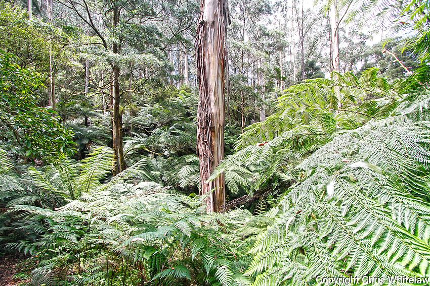 07_Forest and ferns near Lake Elizabeth