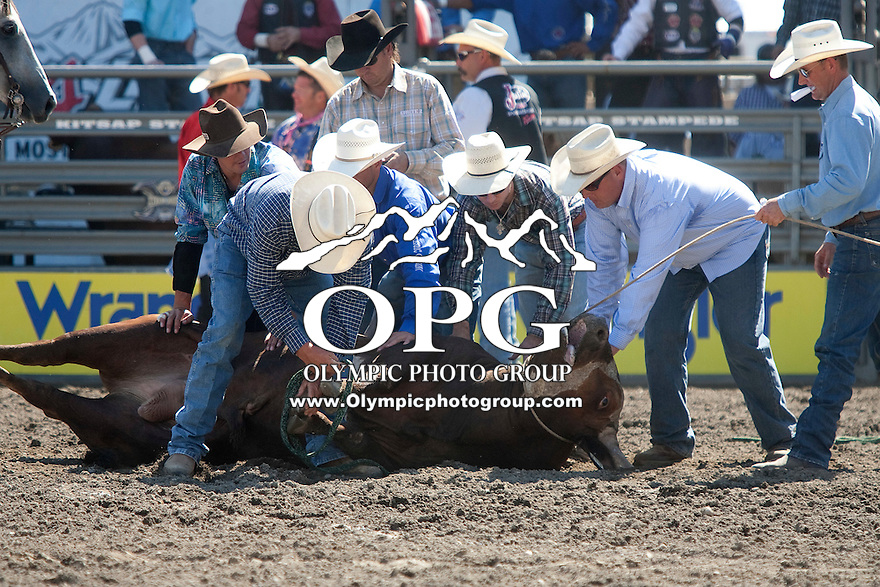 28 Aug 2011:  Rodeo personal assist the bull Beer Thirty after it was injured during the Seminole Hard Rock Extreme Bulls held at the Kitsap County Fair and Stampede Rodeo in Bremerton, Washington.