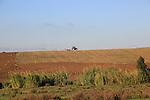 Tractor ploughing ridge along hillside in countryside near Vejer de la Fronterra, Cadiz Province, Spain