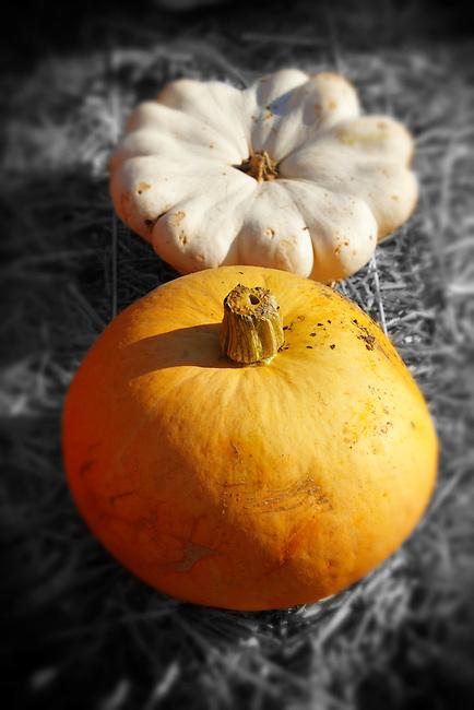 Harvest festival pumpkins display -