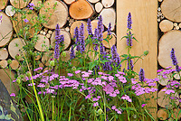 Flowers by the wood pile of firewood, with pink yarrow Achillea, and purple Agastache