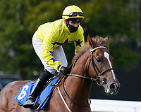 Percys Lad ridden by Charles Bishop goes down to the start of The Radcliffe & Co Novice Median Auction Stakes (Div 2) during Horse Racing at Salisbury Racecourse on 11th September 2020