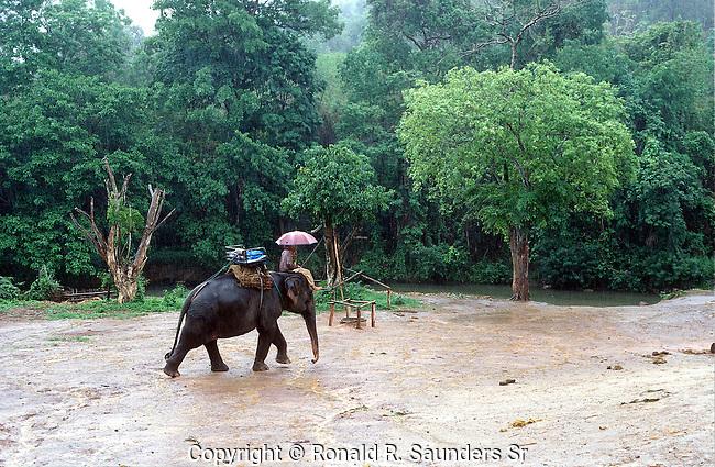 THAI ELEPHANT HANDLER ON ELEPHANT NEAR RIVER IN CHIANG MAI