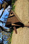 Wooden barn owl nest box on tree, Sutton, Suffolk, England, UK