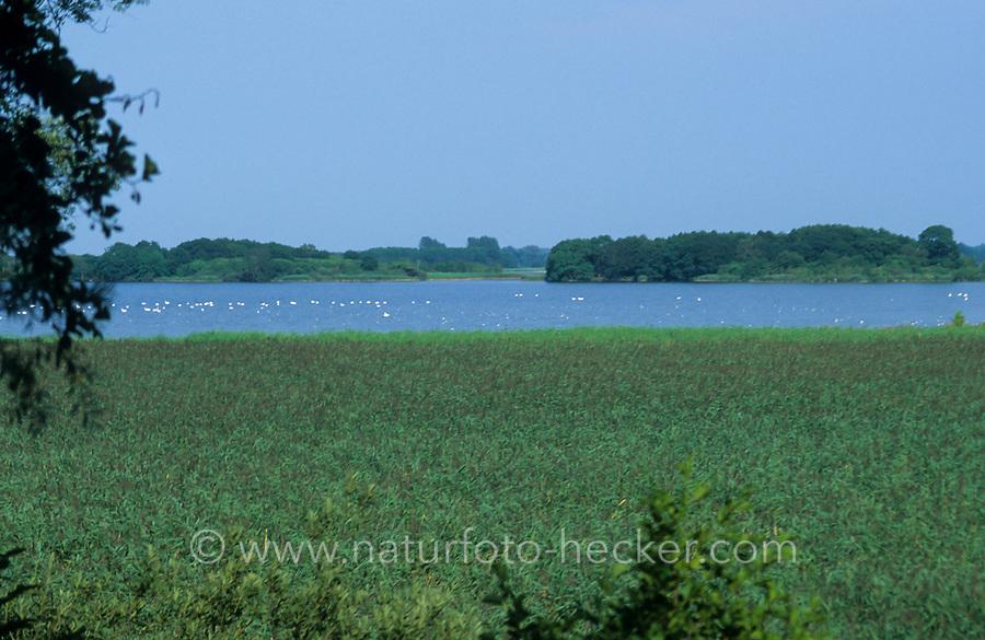 Galenbecker See, Flachsee, Verlandungsee mit breiter Schilfzone, Uferzone, Schilfgürtel, Naturschutzgebiet, Mecklenburg-Vorpommern, Deutschland