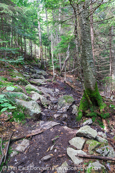 A wet area that is in desperate need of drainage work along the Mt Tecumseh Trail in Waterville Valley, New Hampshire during the summer of 2013.