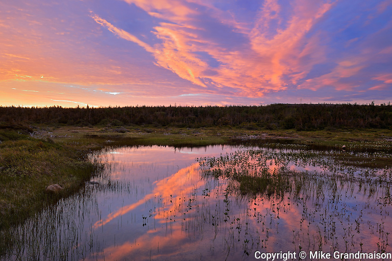 Morning light reflected in wetland <br /> Belburns<br /> Newfoundland & Labrador<br /> Canada